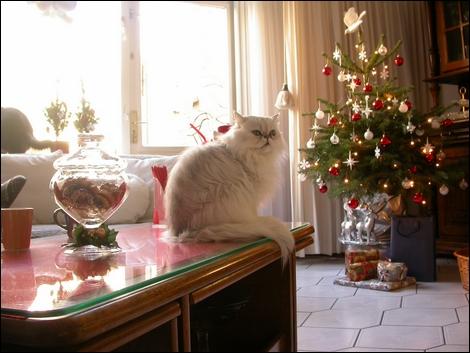 クリスマスに聴きたい着うたフルといえば。